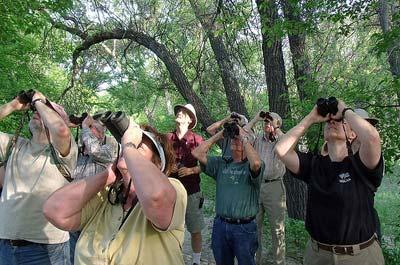 Birding Optics: Binoculars and Scopes - Birdwatching
