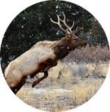 Hunting Binoculars Page