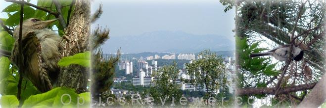 Viewing Seoul through binoculars