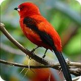 Bird Watching Binoculars Page
