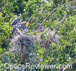Heron Rookery on Maclellan Island